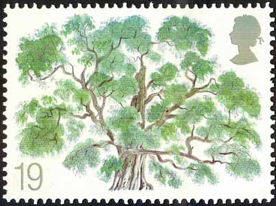 A2 - David Gentlemans unadopted False Acacia design