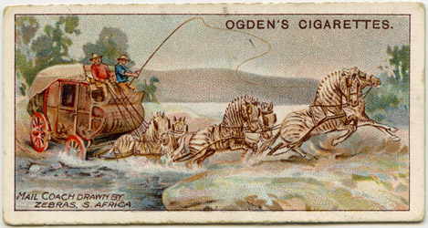 'The Mashonaland Zebra Mail Team.' - Ogden's Cigarette Card (2010-0469/17)c