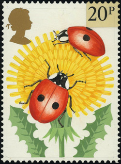 Brian Hargreaves' Two-spot Ladybird design.