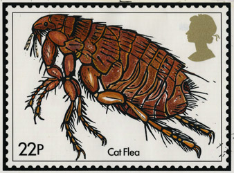 John Norris Wood's Cat Flea design.