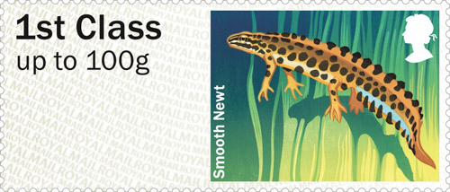 Smooth Newt stamp.