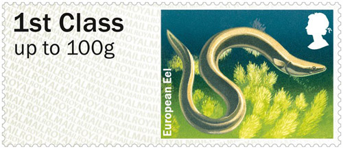 European Eel – 1st class stamp from the Freshwater Life: Lakes Post & Go Stamps, issued 25th June 2013.