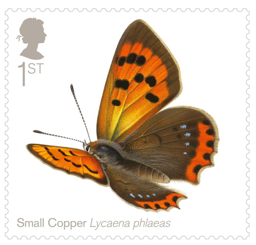 1st Class - Small Copper (Lycaena phlaeas)