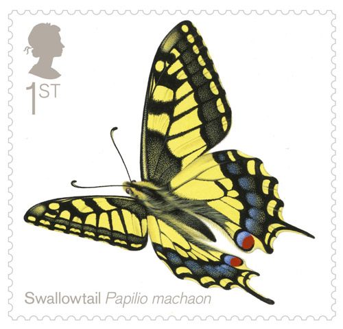 1st Class - Swallowtail (Papilio machaon)