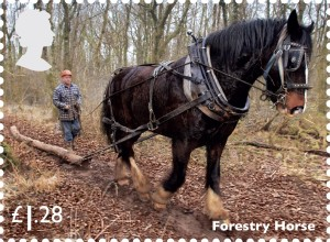 Forestry Horse