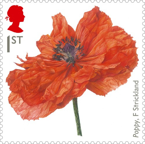 Painting of a poppy by botanical artist Fiona Strickland, 1st class.
