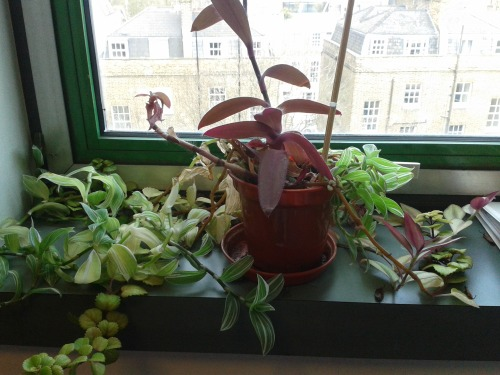 Our Director's resilient plant