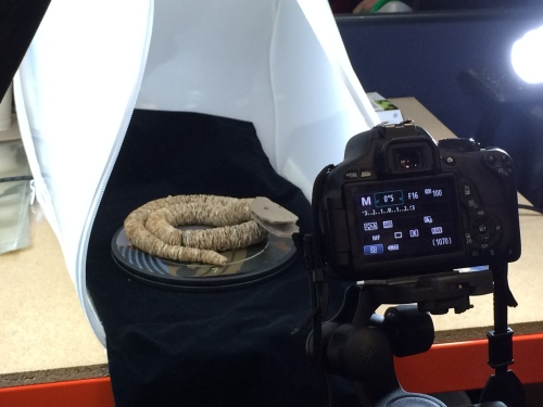 Stamp snake being photographed